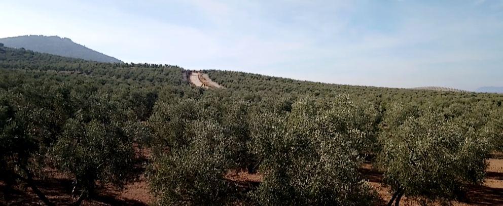 El Camino de Santiago en Estepa