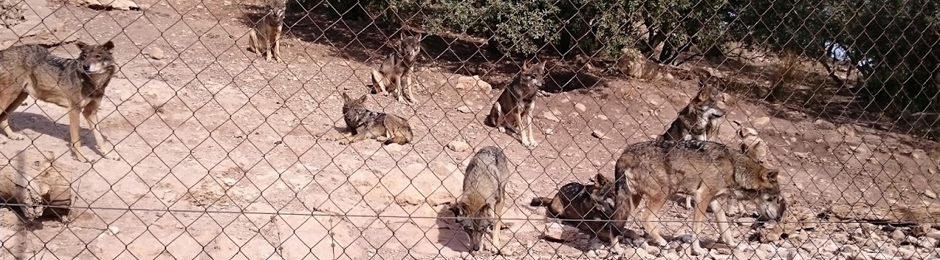 Lobo Park en Antequera