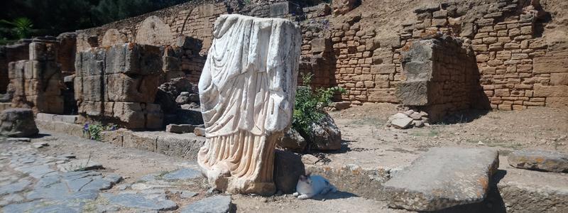 Gatos de la necrópolis romana de Chellah
