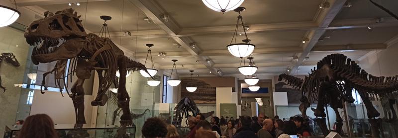 Museo Historia Natural Nueva York
