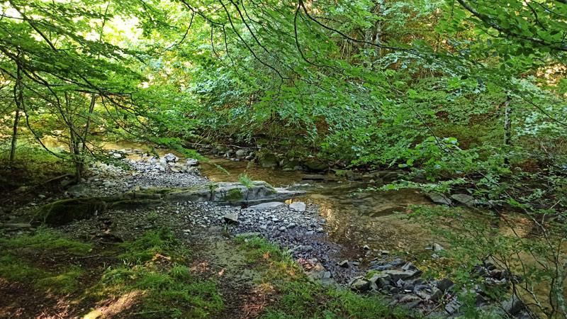 Arroyo en la Selva de Irati