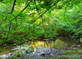 Visitar la Selva de Irati en Navarra